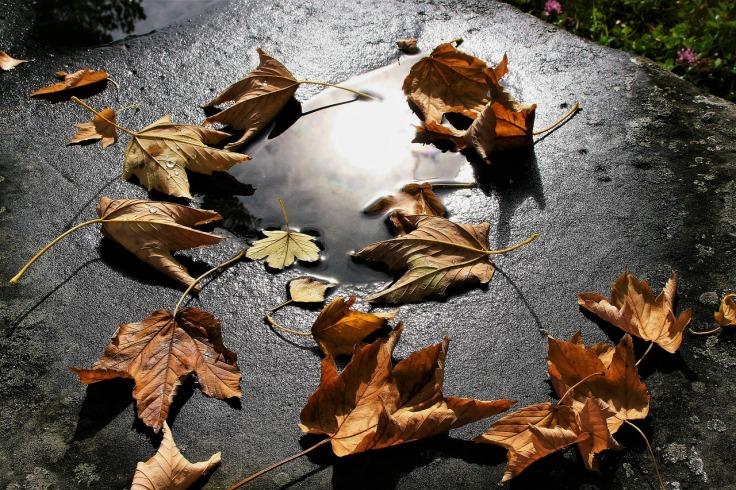 autumn-3648737_1280